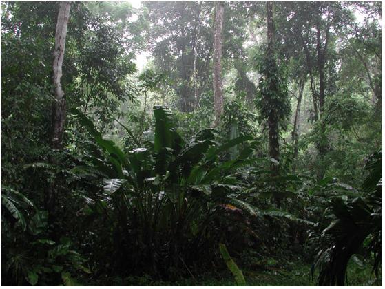 tropicky prales